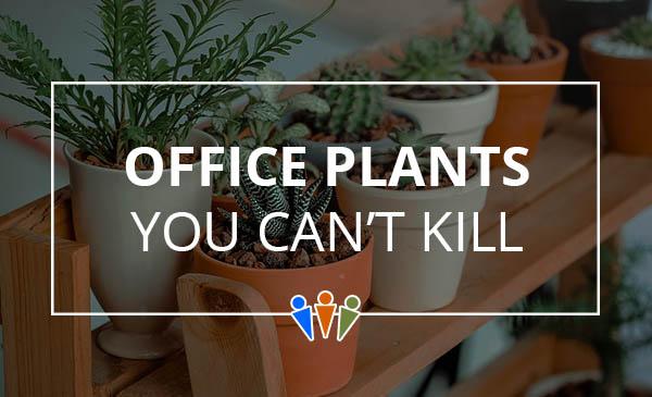 office plants, succulent